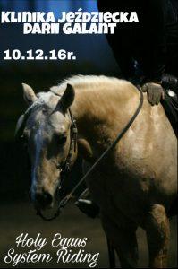 Metoda Holy Equus, trening koni pokazowych, coaching za pomocą koni